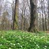 obora-arboretum-3
