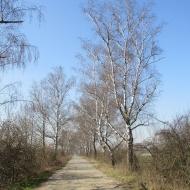olesnica-mala-niemil-03