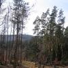 oleszenka-widok-na-swierczyne