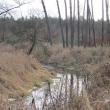 orzeszkow-rez-uroczysko-wrzosy-12