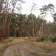 orzeszkow-rez-uroczysko-wrzosy-13