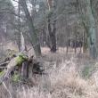 orzeszkow-rez-uroczysko-wrzosy-20