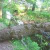 pszczyna-park-zwierzyniec-4