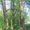 pszczyna-park-zwierzyniec-5
