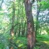 pszczyna-park-zwierzyniec-8