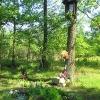 pszczyna-park-zwierzyniec-kapliczka
