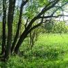 pszczyna-park-zwierzyniec-widok-4