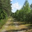 parzyn-lesno-05