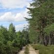 parzyn-lesno-06