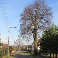 peciszow-05