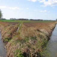 pietrowice-wielkie-rzeka-troja-2