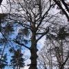 plaski-szczyt-pomnikowy-buk-4