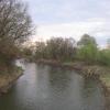 plonia-most-odra-kolo-sluzy-2
