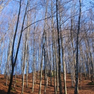 polana-nad-skrzynka-las.jpg