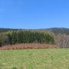poreba-lesnictwo-widok-2