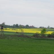 prochowice-jaskowice-legnickie-12
