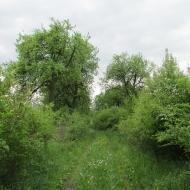 prochowice-ul-ogrodowa-13