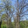 pruskow-drzewa-aleja
