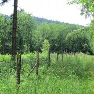 przel-pod-zamkowa-gora-las-rosenau-04