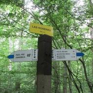 przel-pod-zamkowa-gora-las-rosenau-09