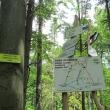 przel-pod-zamkowa-gora-las-rosenau-00