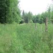 przel-pod-zamkowa-gora-las-rosenau-03