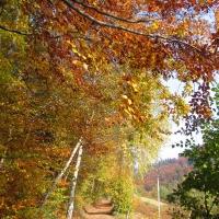 przelacz-widok-droga-jesien.jpg