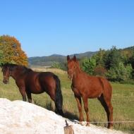 przelecz-mielnicka-konie-3.jpg