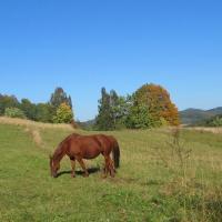 przelecz-mielnicka-konie-1.jpg