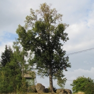 przesieka-ul-kreta-06