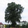 pstrazna-kosciol-pomnikowy-dab