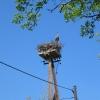 radawie-gniazdo-bocianie