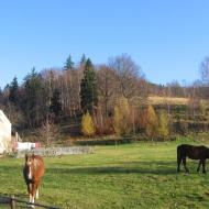 radochow-konie-1.jpg