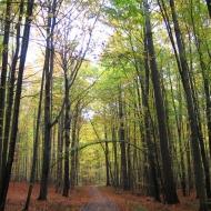 rezerwat-modrzewiowa-gora-2.jpg
