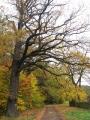 rezerwat-modrzewiowa-gora-3.jpg