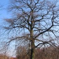 rezerwat-dabrowa-drzewo