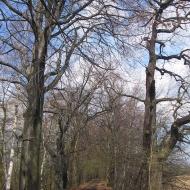 rezerwat-lezczok-aleja-2