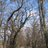 rezerwat-lezczok-aleja-3