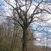 rezerwat-lezczok-drzewo