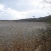 rezerwat-lezczok-staw-salm-duzy-1