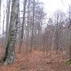 rezerwat-pluznica-2