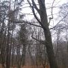 rezerwat-pluznica-3