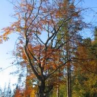 rownica-las-jesien-2.jpg