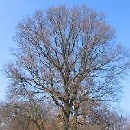 rzeczyce-drzewa-1