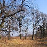 rzeczyce-drzewa-3