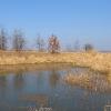rzeczyce-jezioro-10