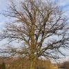 sierakowice-kosciol-drzewo-2