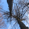skalna-drzewa