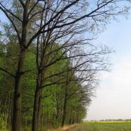 sowczyce-drzewa