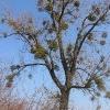 sroda-slaska-sady-drzewo